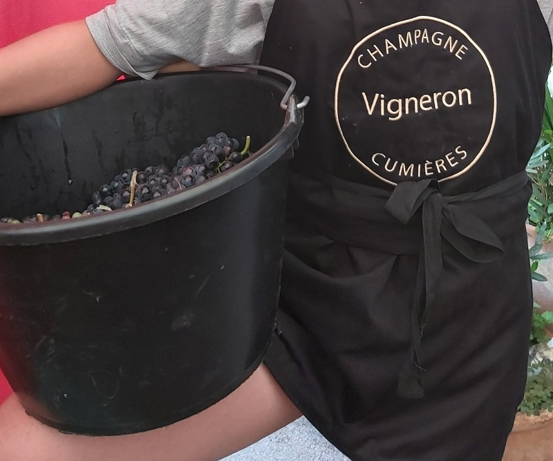 VENDANGES EN CHAMPAGNE1
