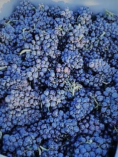photo raisins paniers vendanges