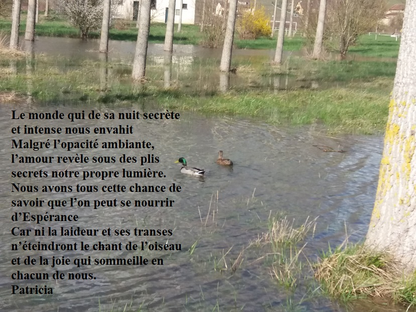photo texte poésie Patricia canards mars 2020